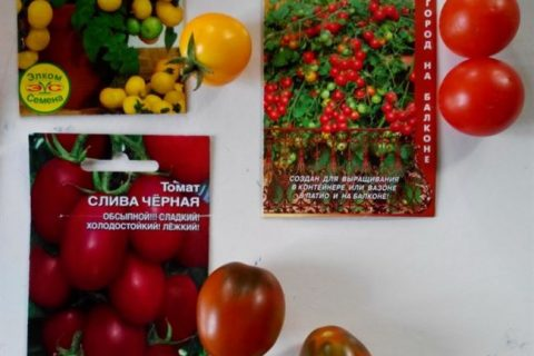 Ампельные помидоры – выращивание🍅, 10 сортов для балкона, фото, отзывы овощеводов