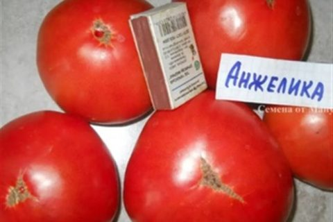 Томат Анжелика: характеристика и описание сорта, урожайность с фото