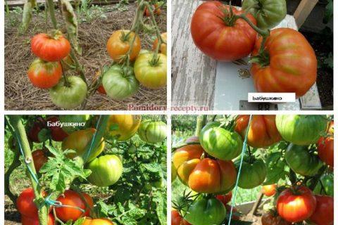 Томаты Бабушкино: описание сорта, отзывы, фото, выращивание