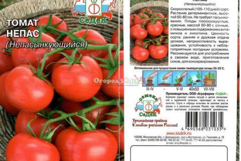 Батыр — сорт растения Томат