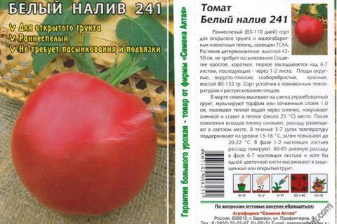 Описание и характеристики сорта томатов Белый налив: как посадить и ухаживать