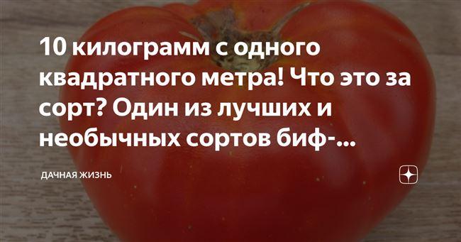 24 килограмма с квадратного метра! Что это за сорт? Один из самых вкусных и высокоурожайных биф-томатов на даче!