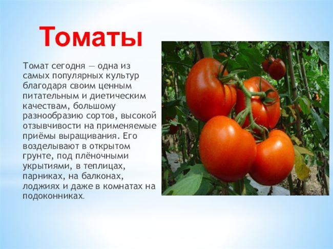 Благодатный - сорт растения Томат