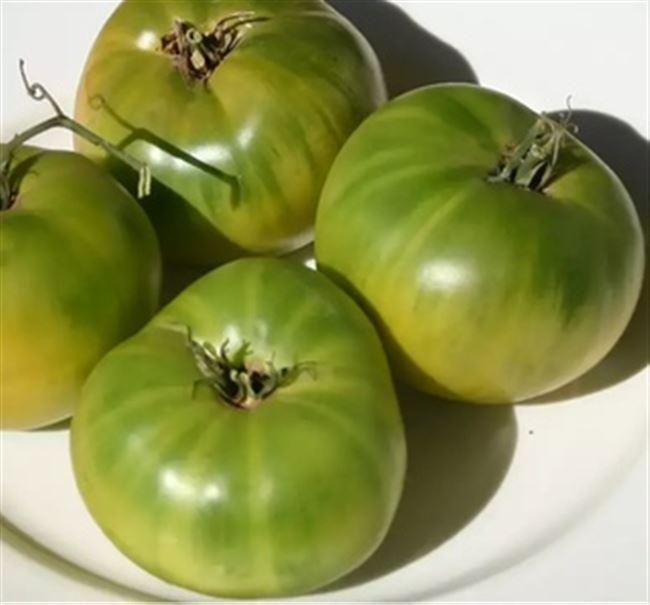 Удивительный сорт помидоров зеленого цвета — томат «Болото» для настоящих гурманов