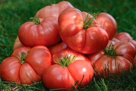 Томат сорта Бренди розовый: описание сорта и особенности выращивания