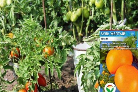 Герда — сорт растения Томат