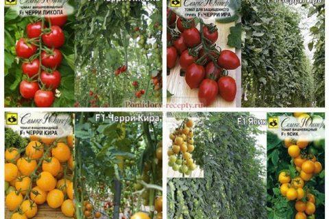В 355 Томат Включен в Госреестр по Российской Федерации для выращивания в пленочных теплицах в ЛПХ. Гибрид салатный, раннеспелый. Растение индетерминантное. Лист средней длины, зеленой окраски. Соцветие промежуточное. Плод яйцевидной формы, очень мел..