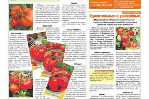 Томат Важная персона: отзывы тех, кто сажал, преимущества и недостатки гибрида, инструкция по его выращиванию для получения богатого урожая