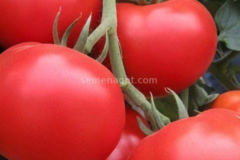Томат Васильевна F1 — фото урожая, цены, отзывы и особенности выращивания