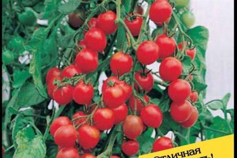 Новый ранний гибрид для выращивания как в коротком, так и в продленном оборотах. Сильное, компактное растение, при высоте 1,5 метра формирует до восьми хорошо выполненных кистей, в среднем по 5 плодов на каждой.