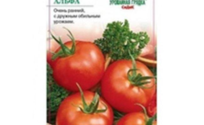 Описание сорта томата Владимир F1, его характеристика и выращивание
