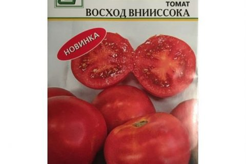 Помидоры Восход f1 описание сорта и его характеристика Русский фермер