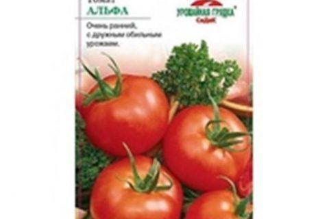Томат Гаврош: характеристика и описание сорта, урожайность с фото