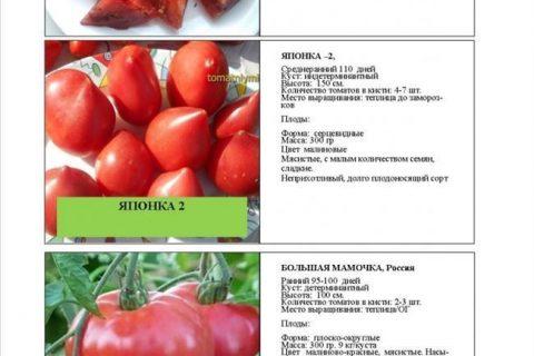 Томат Гилгал: характеристика и описание сорта, урожайность с фото