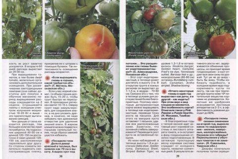 Выбираем урожайные томаты-гномы для выращивания в открытом грунте. Описания и характеристики наиболее популярных среди огородников сортов с фото. Отличительные качества, особенности посадки и выращивания помидоров-дварфов.