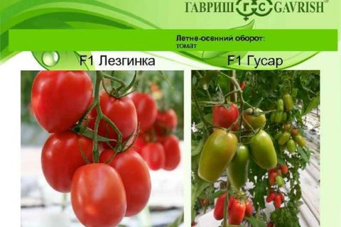 Как всегда быть с урожаем томатов. Гусар Любовь. Часть 1 — YouTube