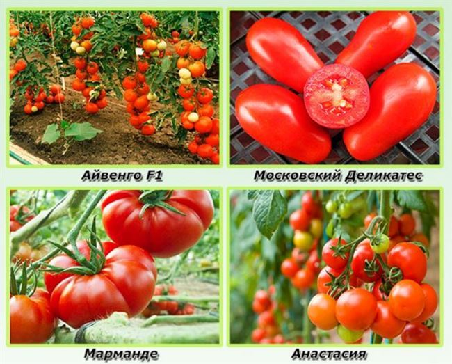Зульфия F1 семена томата индетерминантного (Rijk Zwaan / Райк Цваан)