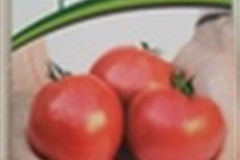 Томат «Империя F1»: урожайность характеристика сорта, отзывы и фото с описанием