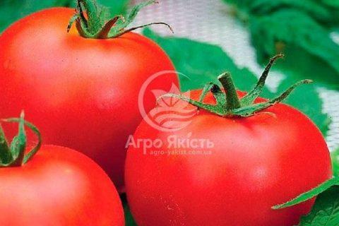Томат Инстинкт: характеристика и описание сорта, отзывы, урожайность, фото