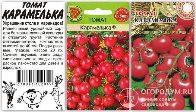 Миниатюрные кустики с крошками-помидорками — украшение грядки: томат «Карамель» и советы по его выращиванию