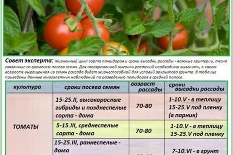 Томат Каспар: описание и характеристика сорта, особенности выращивания, отзывы, фото