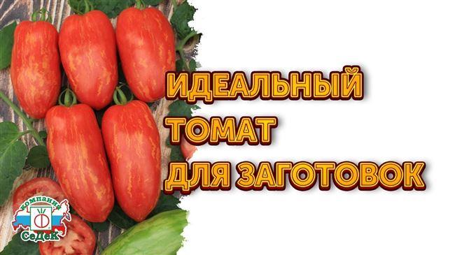 Оригинальный сорт от агрофирмы Седек — томат Каспар полосатый F1: отзывы и описание
