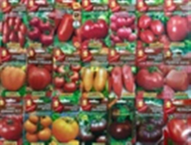 Сорта томатов по алфавиту