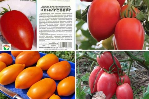 Томат Кенигсберг — описание, выращивание, отзывы с фото и видео