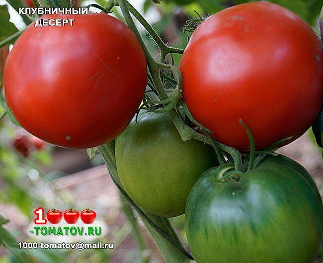 Томат Клубничный Десерт характеристика и описание сорта урожайность с фото