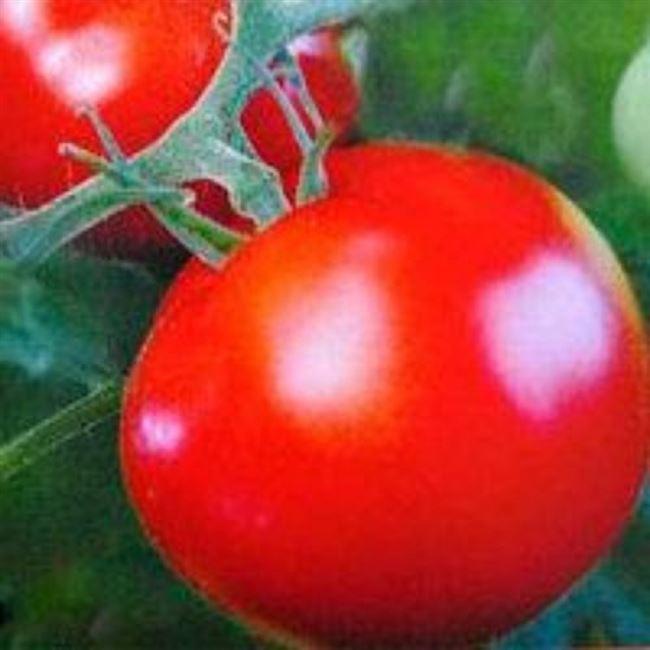 Корнелия F1 семена томата индет. раннего 100-105 дн. окр.-припл. 280-300гр красный (Элитный ряд)