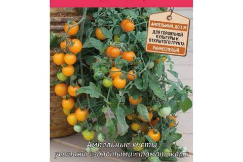 Томат Красная гроздь: характеристика и описание сорта, фото, выращивание черри, урожайность помидоров, отзывы тех, кто их сажал