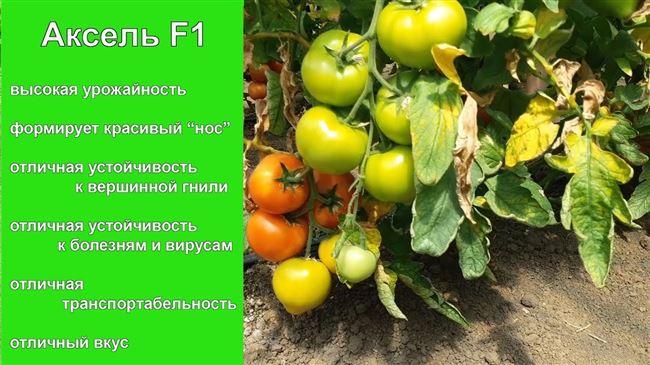 """Вольный Дон от А до Я: """"К"""" - Кривянка"""