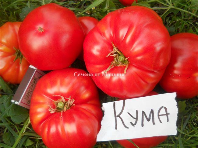 Один из самых щедрых на урожаи крупноплодных томатов — Кума: отзывы и характеристика сорта