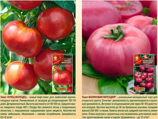 Описание раннеспелого томата Купчиха, выращивание и правила ухода