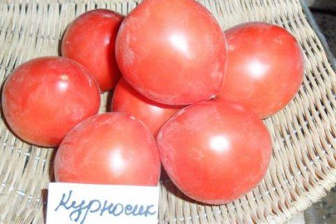 Томат Курносик: отзывы тех кто сажал об урожайности, характеристика и описание сорта, фото семян