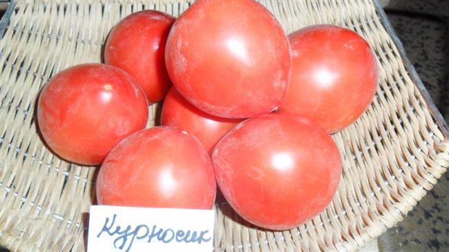Простой в уходе и нескупой на урожаи томат — Курносик: отзывы и описание сорта