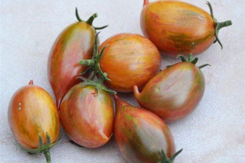 Candy Sweet Icicle (Конфеты сладкие сосульки) — c — сорта томатов — tomat-pomidor.com — отзывы на форуме   каталог