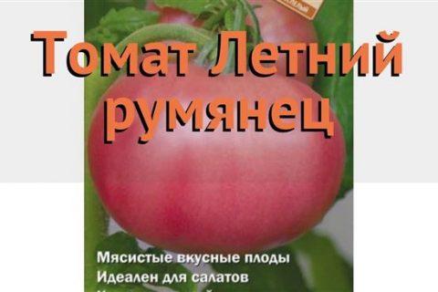 Летний Румянец — сорт растения Томат