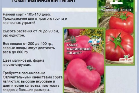 Томат Малиновый Мед: характеристика и описание сорта, выращивание и фото