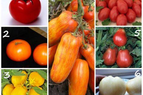 Томат Мамин сибиряк: характеристика и описание сорта, фото семян, отзывы об урожайности помидоров