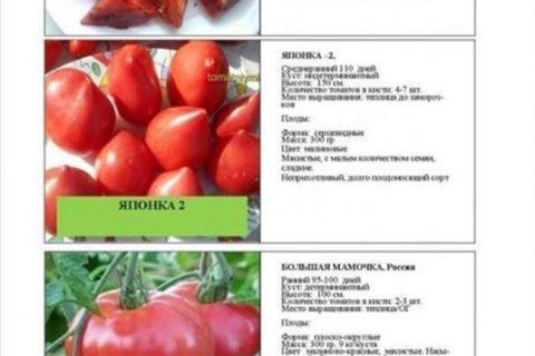 Томат Маркиз f1: характеристика и описание гибридного сорта с фото