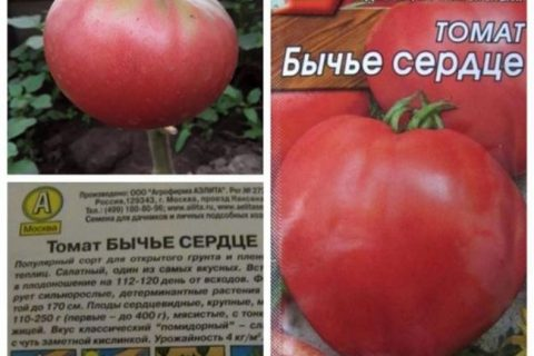 Фото, видео, отзывы, описание, характеристика, урожайность о сорте томата «Миллионер».