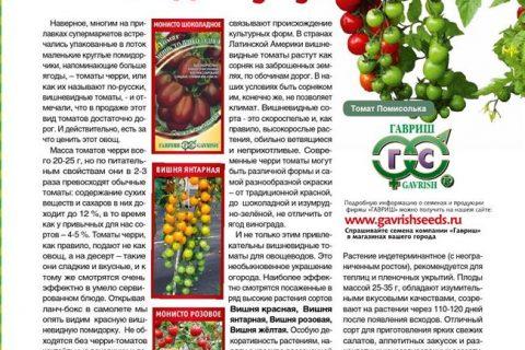 Томат Монисто Янтарное семена — низкая цена, описание, отзывы, продажа