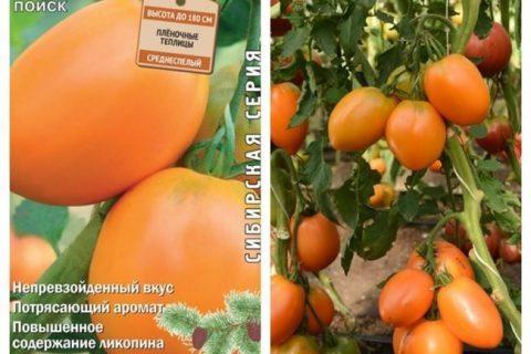 Сорт томата: Московия