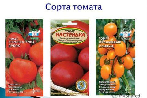 Томат Настенька: описание и характеристика сорта, особенности выращивания, отзывы, фото