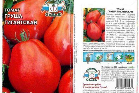 Новосибирский Розовый — сорт растения Томат