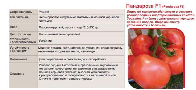 Описание сорта томата Пандароза, особенности выращивания и ухода