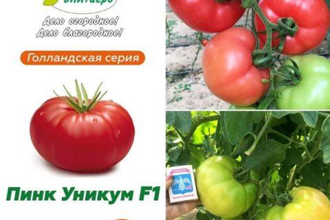 Томат Пинк Райз F1: отзывы и фото куста, характеристика и описание сорта помидоров