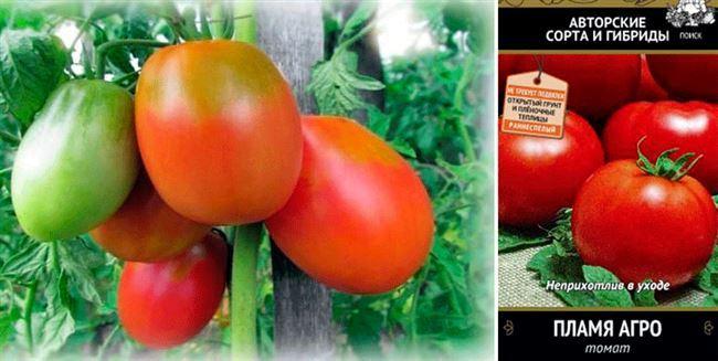 Знакомимся с ранними сортами томатов и выбираем для себя самые лучшие