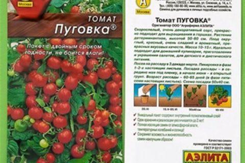 Томат Пуговка: описание и характеристики, особенности посадки и выращивания, болезни и вредители, достоинства и недостатки